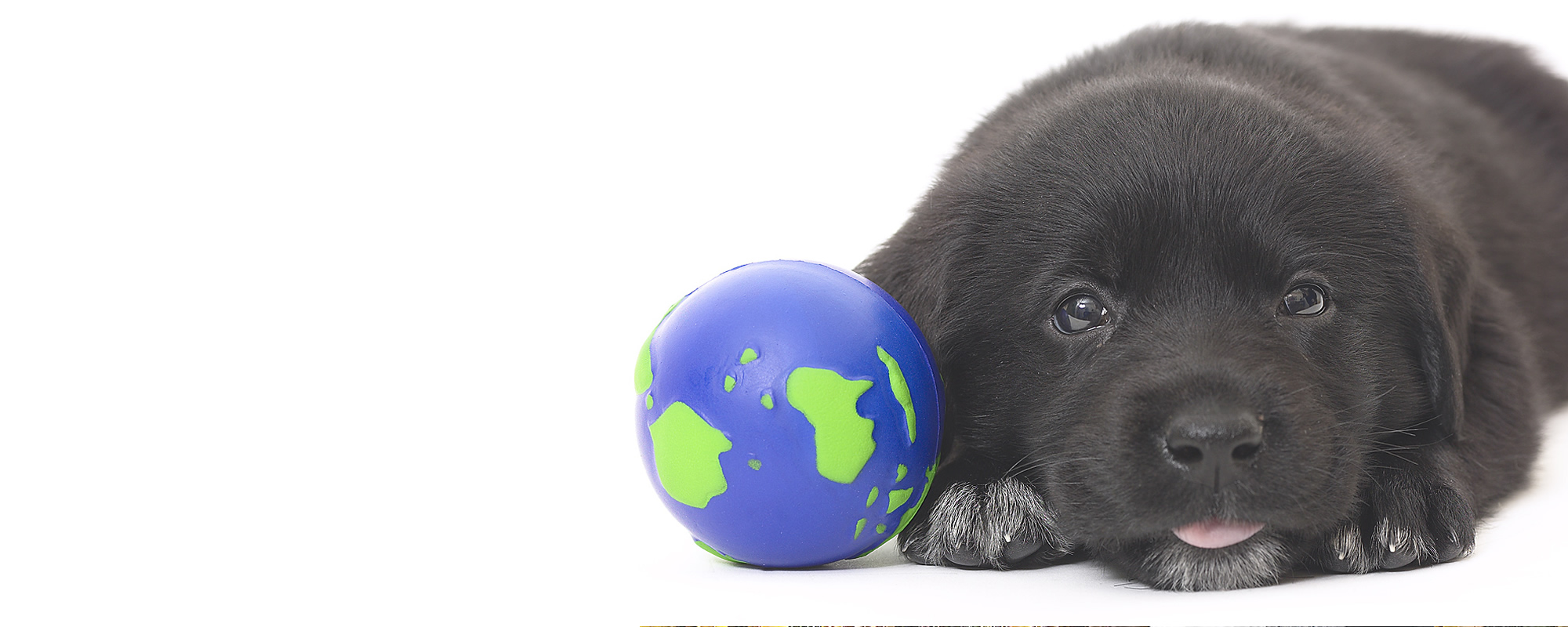<span> Solidarios </span>con los animales