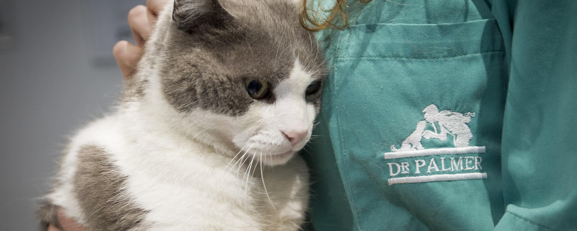 Clínica veterinaria <span>DR PALMER</span>