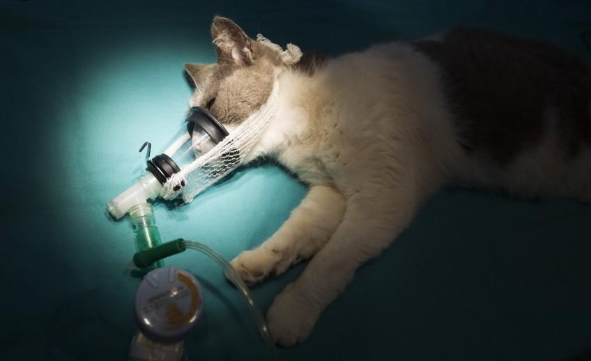 Clinica-Palmer-anestesia