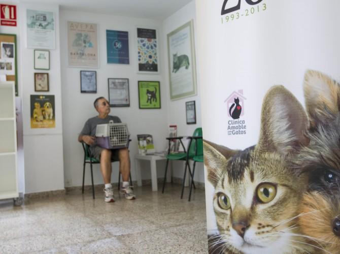 Clinica-Palmer-sala-espera-gatos