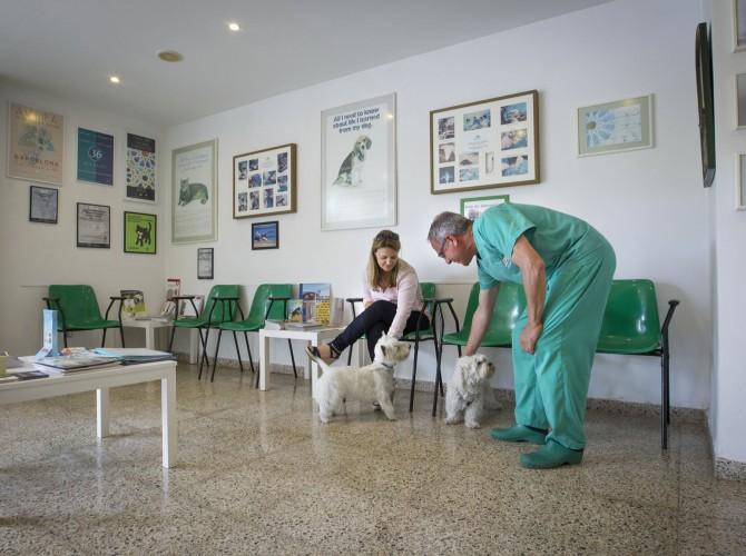 Clinica-Palmer-sala-espera-perros