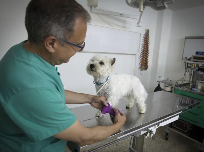 Clinica-Palmer-vendaje-perro2