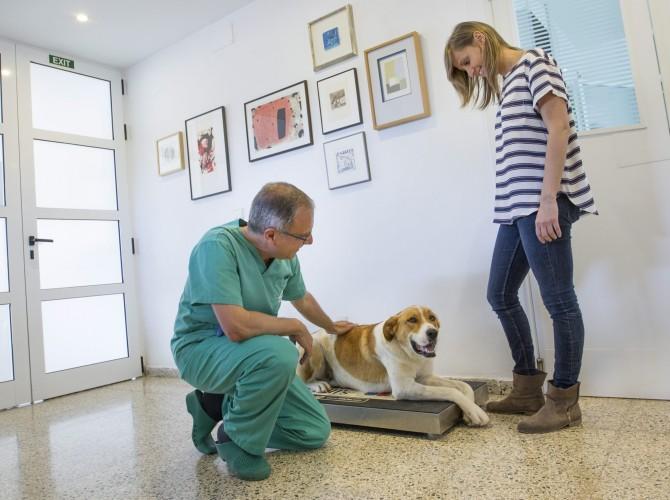 Clinica-veterinario-Palmer-dieta