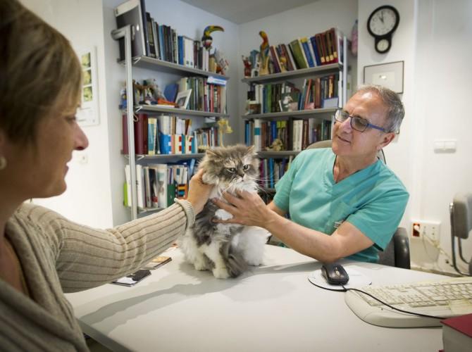Clinica-veterinario-Palmer-revision-consulta