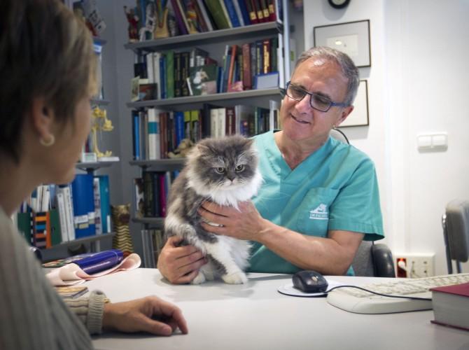 Clinica-veterinario-Palmer-revision-consulta-gato