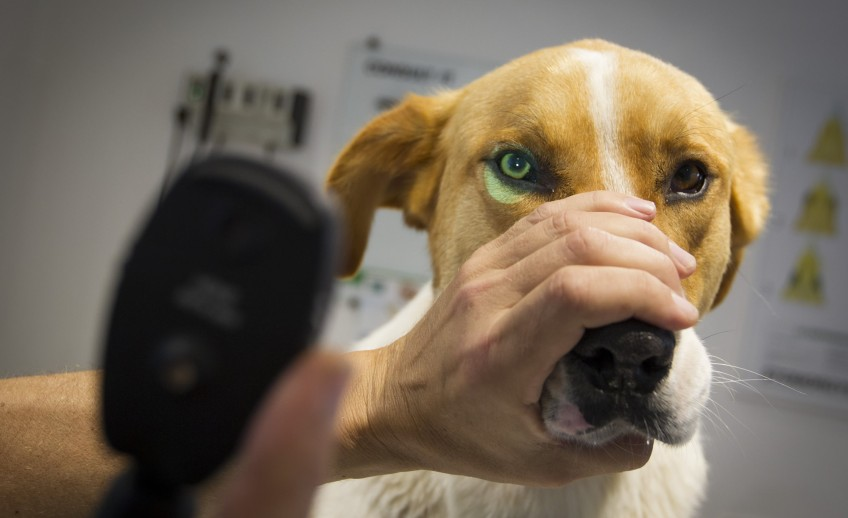 Clinica-veterinario-Palmer-revision-perro2