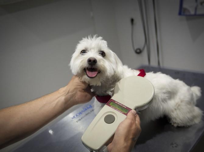 Clinica-veterinario-Palmer-revision-perro3