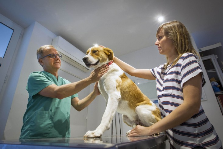 Clinica-veterinario-Palmer-servicios