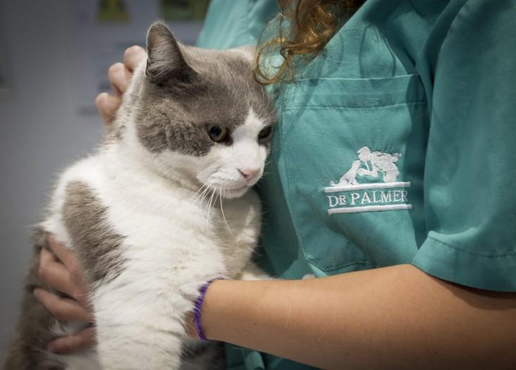 Gato-veterinario-palmer2